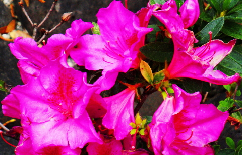 Pink flowers soaking up the sun.